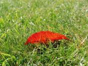 Fall Foliage_5