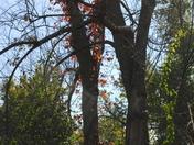Fall Foliage_6