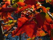 Fall Foliage_7
