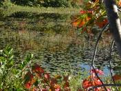 Fall Foliage_8
