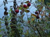 Fall Foliage_9