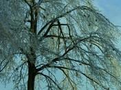 Temple Mt.  lone tree  by KC & Z