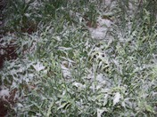 Grafton, NH 1 am 5/26/2013 snow
