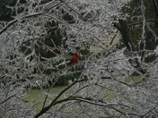 Ice Storm 014.jpg