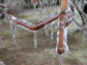 The Ice on a branch