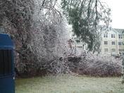 Icy Trees