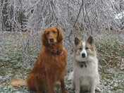 Riff-Raff & Ruckus sitting in front of the Ice covered tree hanging in our yard