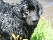 Koda enjoying some swimming time