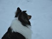 Stella Standing Watch