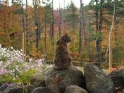Fall Feline