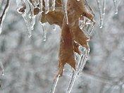 Ice Storm Dec 12, 2008