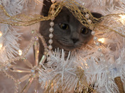 Paris's Purrfect Christmas activity!