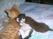 Poppy, Jack, and Coco