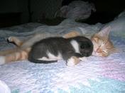 Poppy and Jack