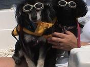 "Just chillin' in our ""doggles."""