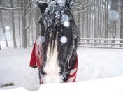 How I LOVE the snow!