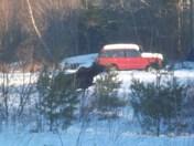 Moose and Kids 007.JPG