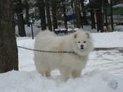 yuki in march snow