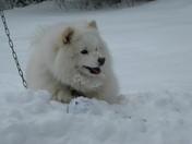 Yuki Chan, our snow dog!