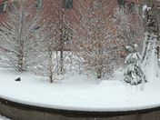 snowy view from library