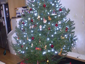 christmas tree in spofford NH