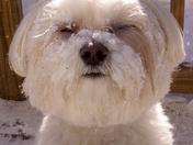 Snowy Faced Boy!