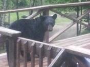 Black Bears on porch