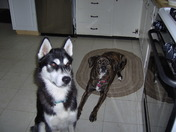 Silina and Koda