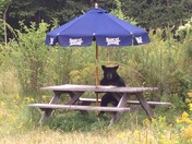 Bear waiting for a beer?