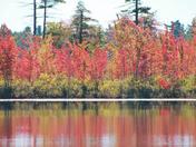 Kingston Lake Foliage