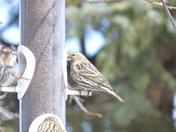 birds 004.JPG