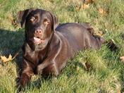 Cassie the Wonder Dog