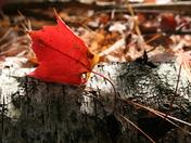 Autumn 043.JPG