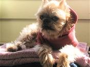 Ozzie, a puppy mill survivor