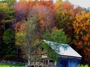 Beautiful Boscawen Barn/Foliage