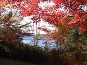 Camp Morgan Washington Fall Foliage