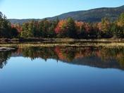 Lily Pond White Mountain Valley