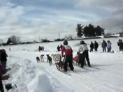 Sled dog photo finish