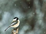 Snow Count