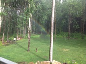 Rainbow in my front yard...looking for the pot of gold!