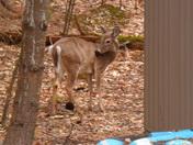 deer so close