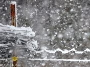 Barbwire in snow