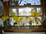 Collection of old bottles and Spring flowers from yard