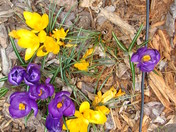 FIRST DAY OF SPRING FLOWERS