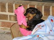 Annabelle & Binkie-toy