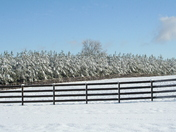 front field in the snow
