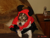 This is why dogs hate halloween
