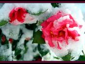 Botanical Garden in Clemson during winter snow