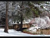 Snow at Botanical Gardens in Clemson last winter