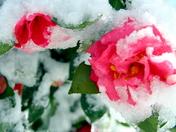 Botanical Gardens during last winter's snow